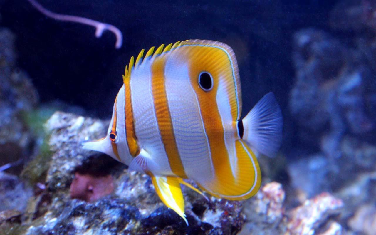 5d marine aquarium theme apk download free for Salt water fishes