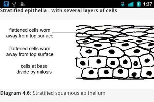 Animal Anatomy and Physiology apk screenshot