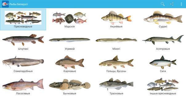 Рыбы Беларусі apk screenshot
