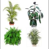 Ornamental Plants icon
