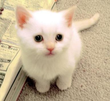 Aneka Kucing Peliharaan apk screenshot