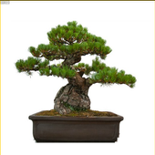 Best Bonsai Plants icon