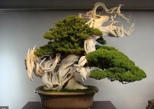 Best Bonsai Plants poster
