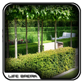 Modern Garden Hedges Design icon
