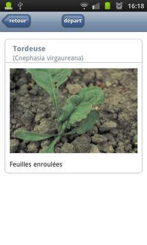 Maladies de la betterave [BE] apk screenshot