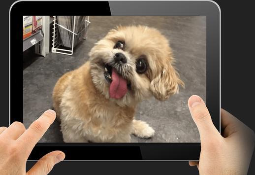 TV Video Pets & Funny Animals apk screenshot