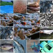 Panduan Cara Budidaya Ikan icon