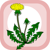 Home herbal icon
