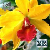 Орхидеи icon