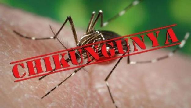 Chikungunya poster