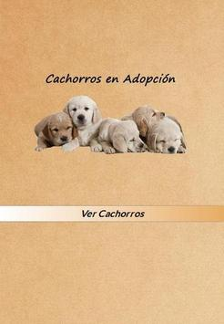Cachorros en Adopcion poster