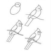 Learn To Draw Birds And Parrot icon