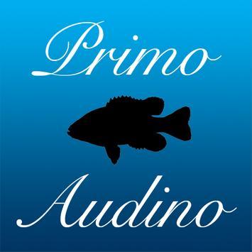 Primo Audino poster