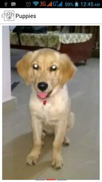 Dogg-Yo apk screenshot
