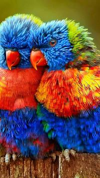 Rainbow Lorikeet Wallpapers poster