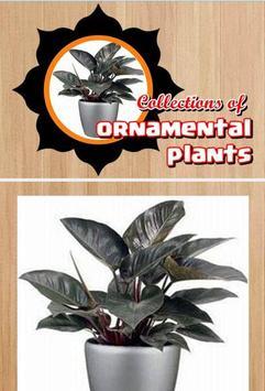 Ornamental plants apk screenshot