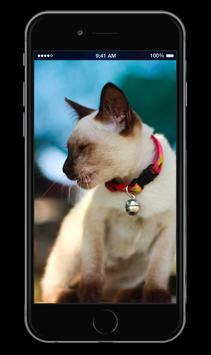 Cute Kitten Cats Wallpapers apk screenshot