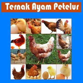Ternak Ayam Petelur poster
