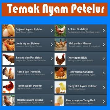 Ternak Ayam Petelur apk screenshot