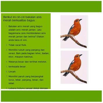 Perawatan Burung Anis Merah apk screenshot