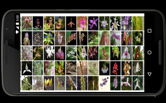 Orchids in the world apk screenshot