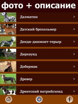 Породы собак - все собаки FREE apk screenshot