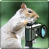 Animalphotos icon