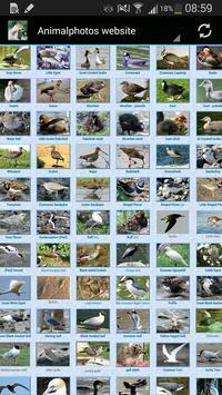 Animalphotos apk screenshot