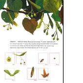 Детям о растениях icon