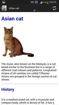 Cat breeds apk screenshot