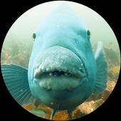 NSW Marine Life icon