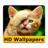 Cat wallpapers and funny pics icon