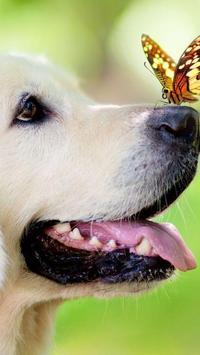 Frontosa Pet Shop apk screenshot