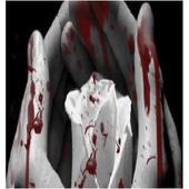 Bloody Rose (YA Novella) icon