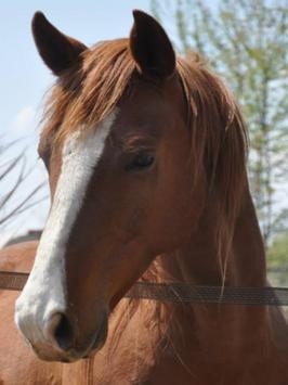 HORSE Sale - Juneau Wisconsin apk screenshot