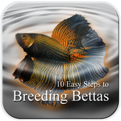 10 Easy Steps to Breed Bettas icon