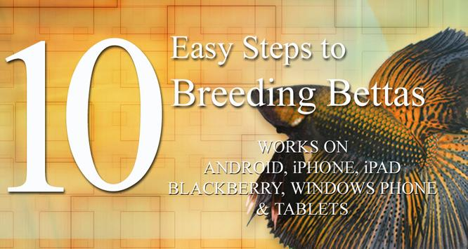 10 Easy Steps to Breed Bettas apk screenshot