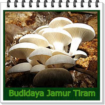 Budidaya Jamur tiram poster