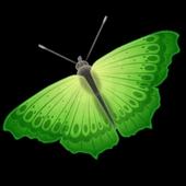Каталог Бабочек icon