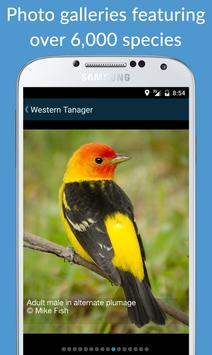 BirdsEye Bird Finding Guide apk screenshot
