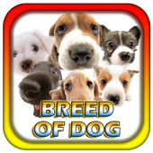 Breed Of Dog icon