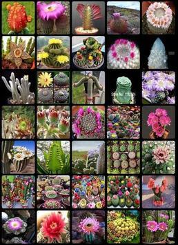 Cactus Flower apk screenshot