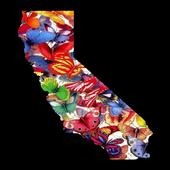 California Butterflies icon