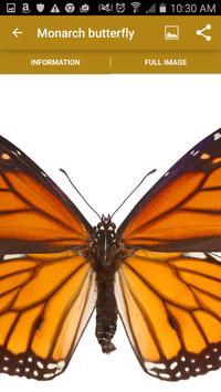 California Butterflies apk screenshot
