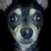 Escuadron Canino icon