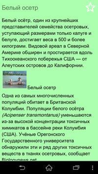 Рыбы России беспл. poster