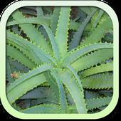 Каталог лекарственных растений icon