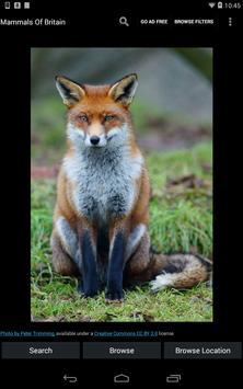 Mammals Of Britain apk screenshot