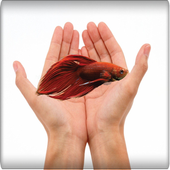 betta fish care-ultimate guide icon