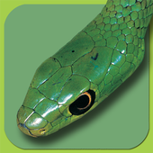 Snakes of Southern Africa Lite icon